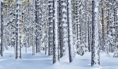 christmas-valley-winter-forest