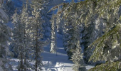 north-upper-truckee-nearby-trails